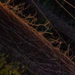 Jo Kreiter Tree Dance
